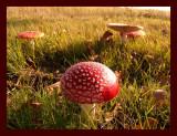 Fungus-1.jpg