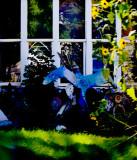 Bluebird in an Artist's Front Yard