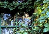 Birdcage in the Window
