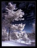 winter's great escape