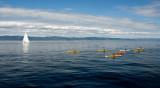 Kayaks #1