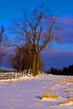 Knox Farm Tree  8:32 AM