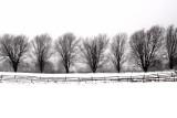Winter Tree Line