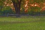 Tree Fence Sunset On Knox