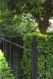 Fence On Wesley Pl