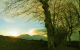 Nizas, route de Cisso