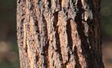 Ghosted Tree Blur.jpg