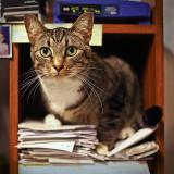 My version AMelvin's Cat Image