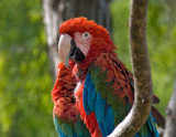 Zoo '08