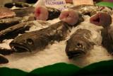Fish at the Santa Caterina Market