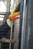 Toucan Sam trying to break free