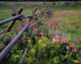Wildflowers and Aspen Bole Fence