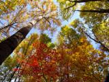 canopy3.jpg