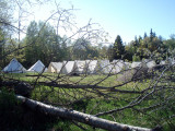 Norska tält