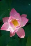 Thaimaa2007-253.jpg