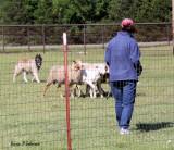 herding_abtc_2010