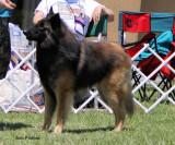 dog_classes_abtc2010