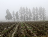pbase The fog after the rain April 5 2010_DSC9166.jpg