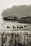 Ducks-world.jpg