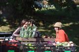 Greco Sisters - Hepworth Farms 115.jpg
