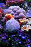 Sea Life, Xcaret Aquarium
