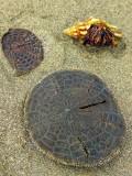Unidentified Marine Life, Manuel Antonio National Park