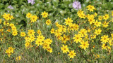 yellow_flowers.jpg