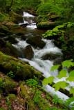Mountains of Appalachia Springing  to Life
