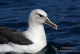 Hybrid Albatross