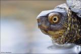 Amfibieën en Reptielen