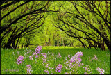 Flowered canopy