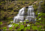 Four Mile falls & Hobblebush