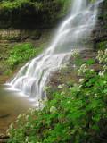 Campbell Falls & cohosh