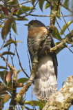 Cuckoo, Dark Hawk @ Richmond Bungalow