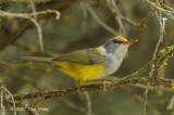 Tailorbird, Montain @ Telecom Loop