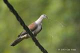 Pigeon, Mountain Imperial @ Telecom Loop