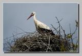 :: Storks May 2010 ::