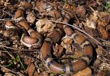 wildlifereptiles