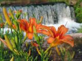 Hodgson Mill Flowers.jpg