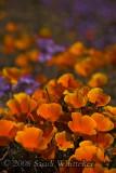 California's Bloomin' No 2