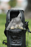 Photo-A-Day, April-2008, -rabbit