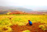 dongchuan_hungtudi_red_soil_ter