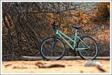 Bicyclette buissonnière