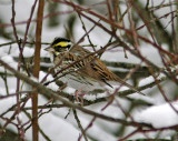 Rare birds on Järvafältet