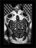 Turtle Back