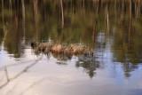 Tørvegrav i Småland