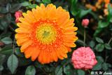 Hong Kong Flower Show 2010