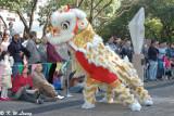 Lion dance DSC_3643
