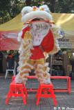 Lion dance DSC_3524