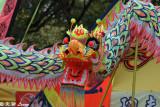 Dragon dance DSC_3869